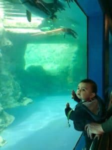Penguins swim at the Mystic Aquarium while a toddler looks on.